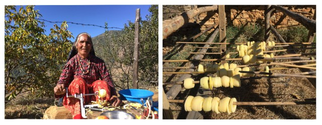 Rupa Rokaya, 52, (above) is a successful entrepreneur and makes a profit selling fresh and dried apples after the Karnali Highway linked Jumla to Surkhet.