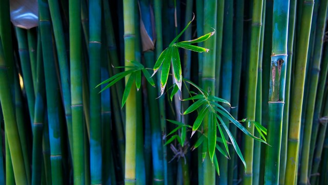 green-bamboo-creation-3