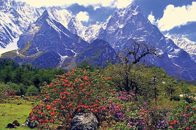 shingba-rhododendron-sanctu
