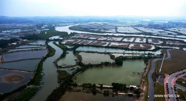 Photo taken on Dec. 4, 2016 shows the shrimp pools in Qinzhou City, south China's Guangxi Zhuang Autonomous Region.