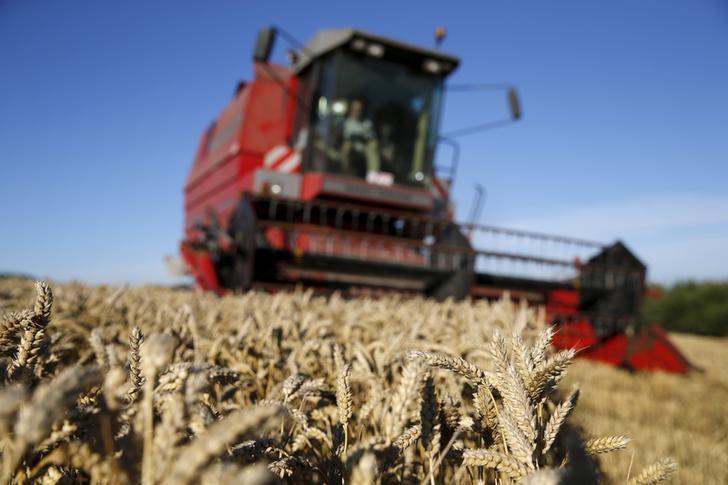 © Reuters.  Consultoria eleva previsão de safra de trigo da Rússia para 63,5 mi t