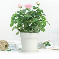 Xiaomi Youpin Flower Pot Monitor