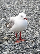 northland_jean_paul_mouette_1371