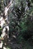 Egmont Park - Goblin Forest
