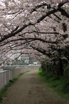 Fujisawa - On the way to Enoshima