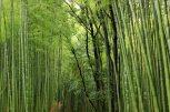 Kyoto - Arashiyama