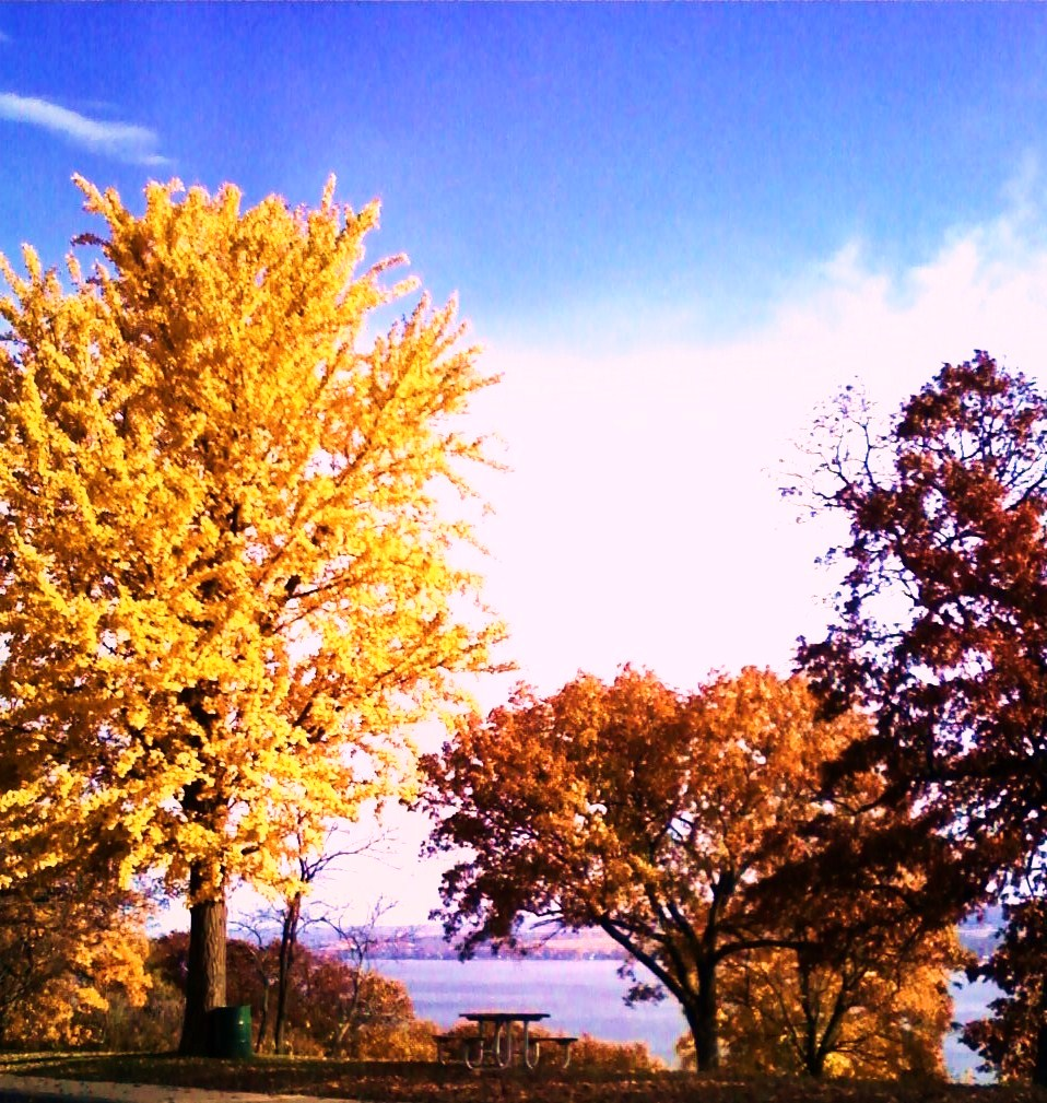 Fall!  on Grandview Dr.