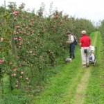 Självplockning av äpple