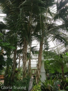 Palm Trees!!
