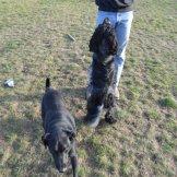 Szaki i Taiga na spacerze