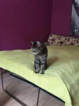 Tragedia kociego staruszka - apel o dom!