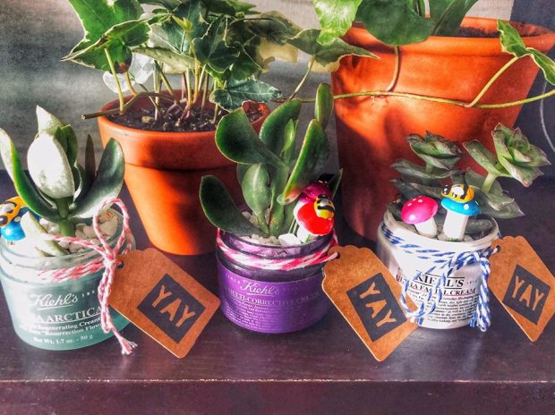 Kiehl's Canada Canadian Earth Day Events Activities Free Succulent Plant your Own In-store Canadian Freebies Spring April 2019 - Glossense