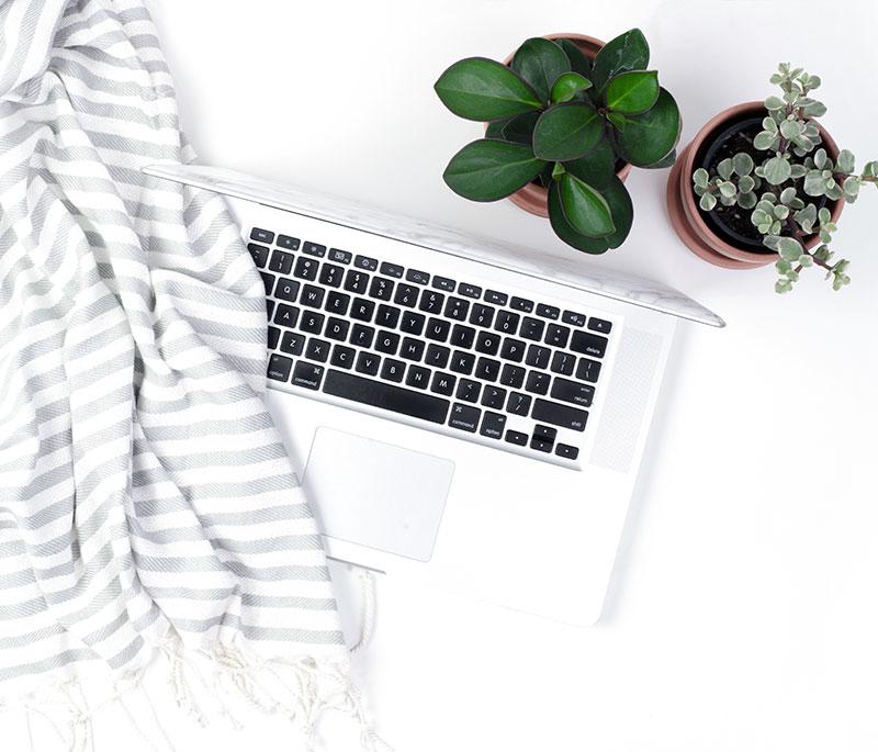 laptop blanket scarf plant