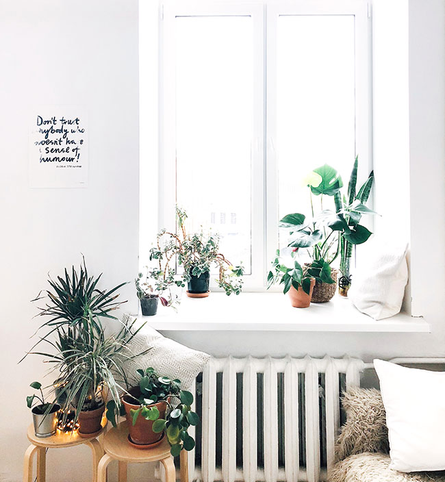 home with plants