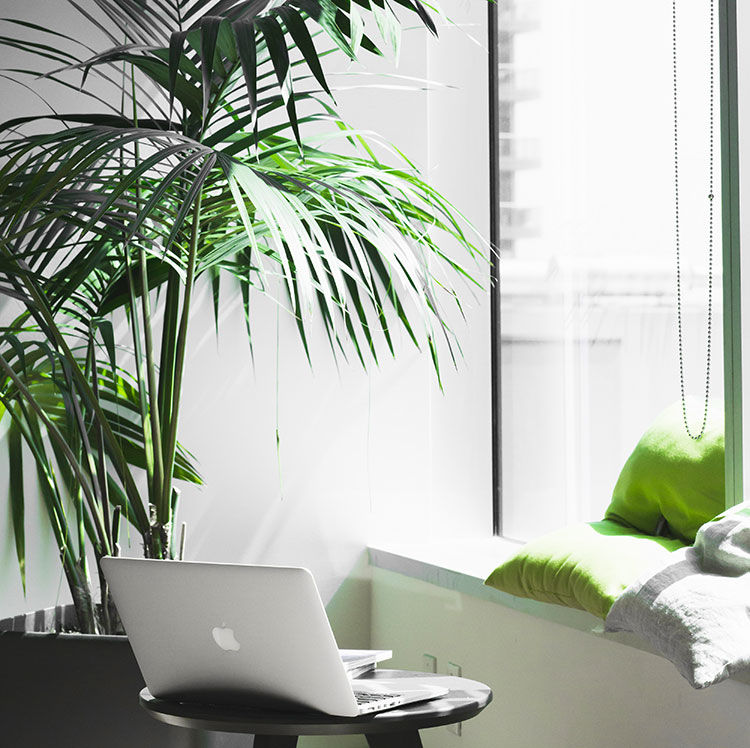 laptop in a room with cushions and a plant