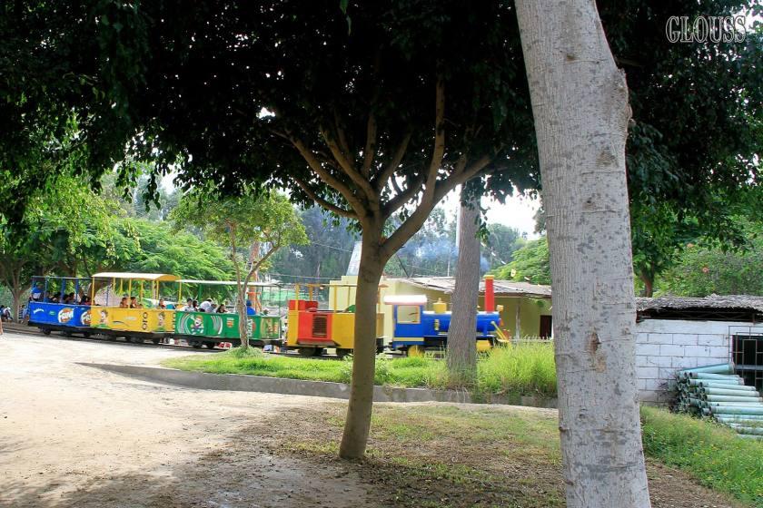 Tren del vivero forestal de chimbote for Vivero del parque