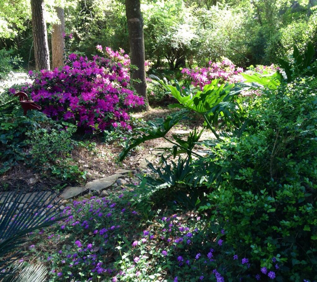 Haiku to Welcome Spring: Nature's Aria