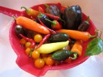 Today's harvest brought multi-colored peppers in varying degrees of heat.