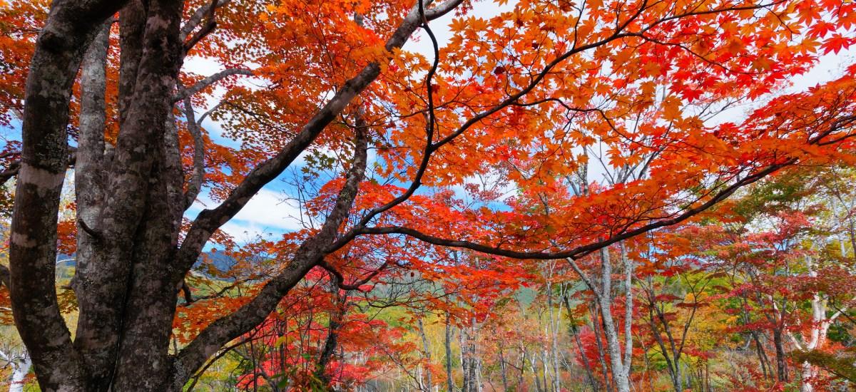 Autumn Leaves: Haiku for Autumn