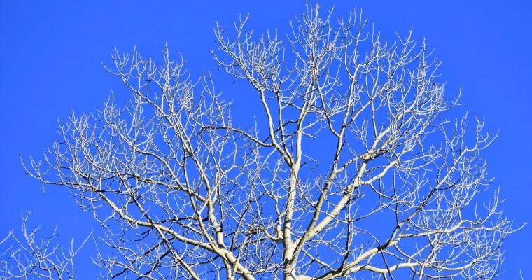 Valentine Haiku for Tree and Sky