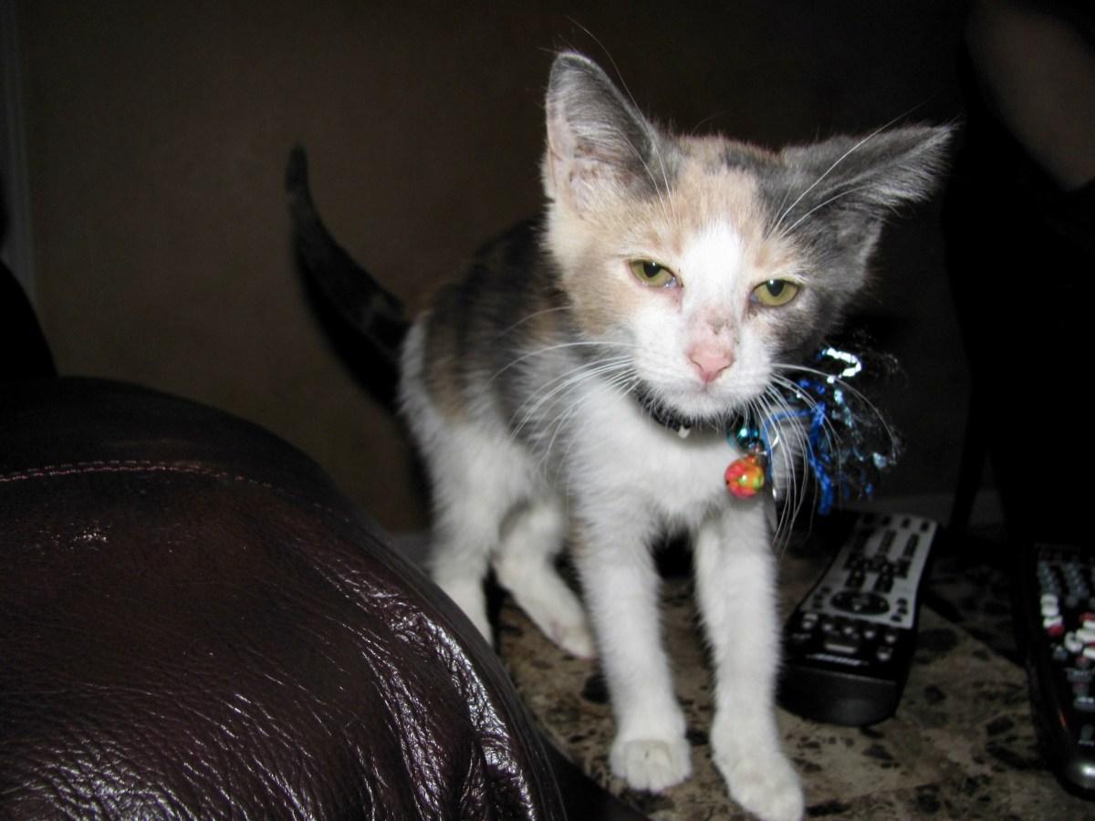 Fiona Baby Kitty.jpg