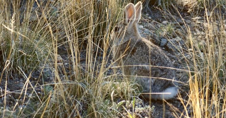 Rabbit, Run!
