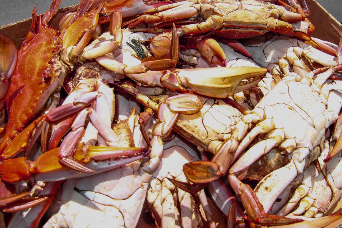 Epic Seafood Boil Memories from Bay St. Louis, Mississippi