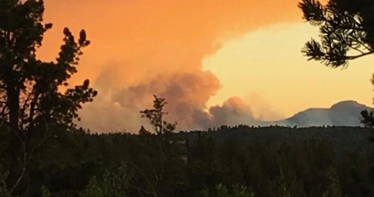 Haiku: Wildlife and Wildfire