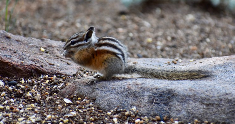 Peacefulness and Chipmunk Portraits