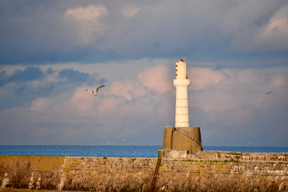 Gulls Round the Lighthouse