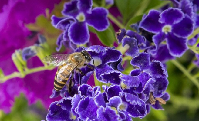 Happy Earth Day, and Have You Thought About Bees?