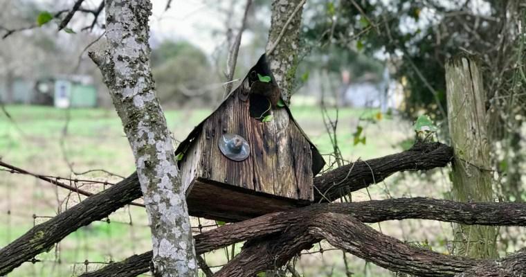 Birdhouse Mindfulness