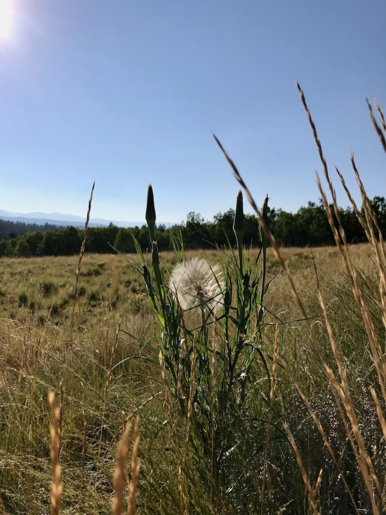 Dandelion in the foreground with mountains in the distance.