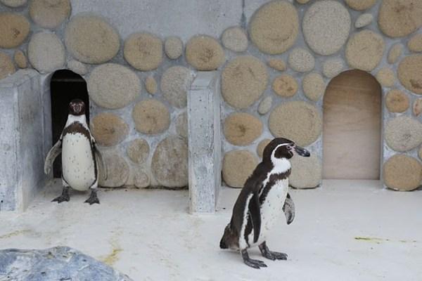 桐生が岡動物園に行ってきた。