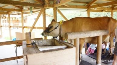 ジャージーの牛さん