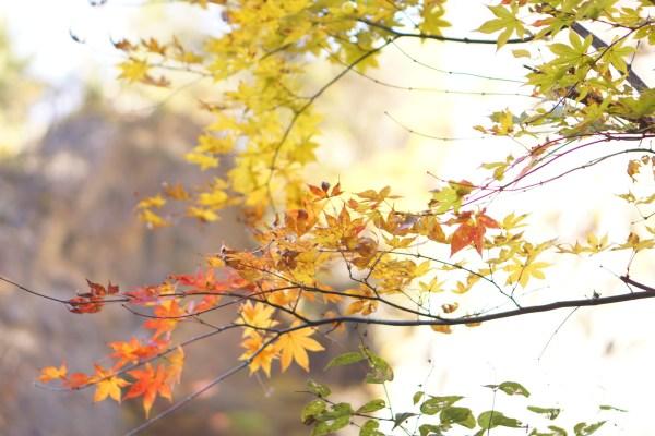 紅葉を見にいってきた。