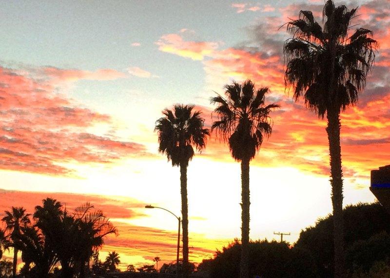 Los-Angeles-Palm-Trees