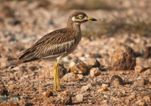 El agroecosistema un espacio productivo lleno de vida - El delta a vista de pájaro