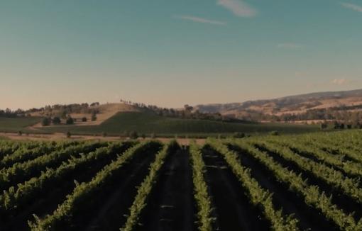 Yarradindi Vineyard
