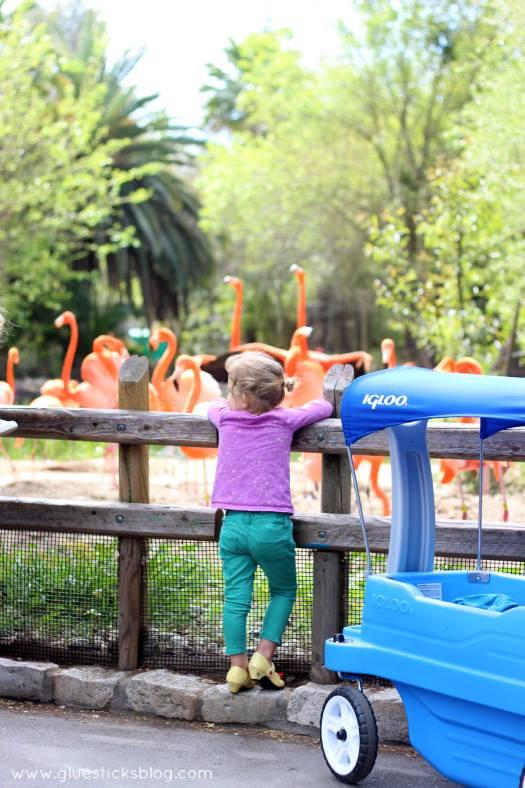 toddler looking at flamingos