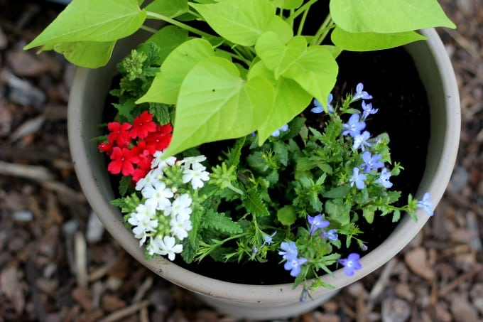 Patriotic Flower Planter