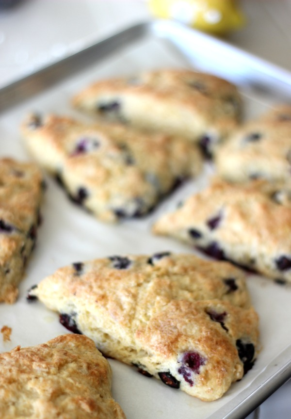 Blueberries, freshly squeezed lemons, and cold butter are the key ingredients to this deliciously light and fluffy blueberryscones recipe. Perfect to enjoy with a cup of herbal tea on a cold morning!