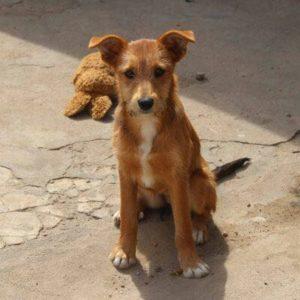 Bordhund Nucha