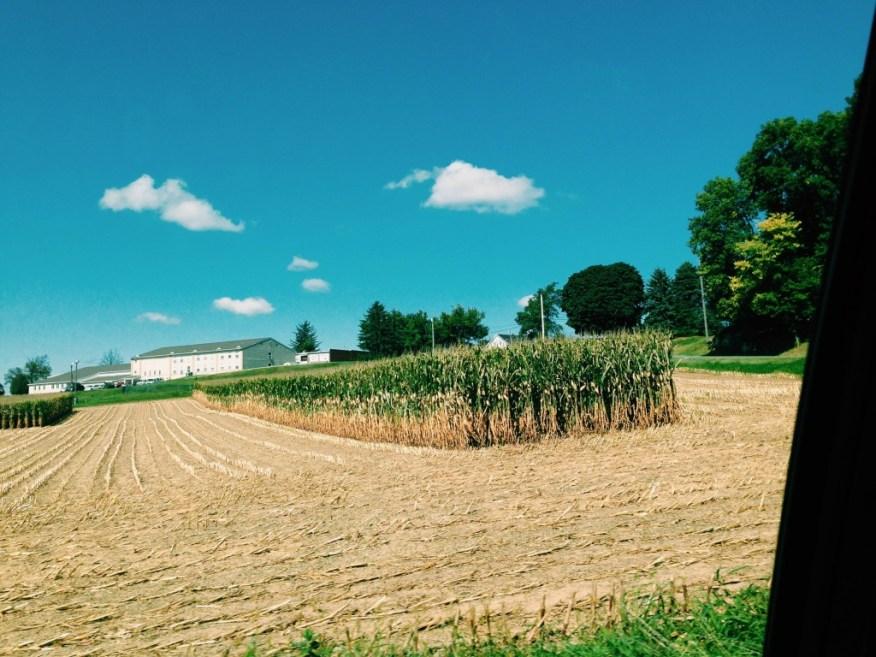 farms- corn fields