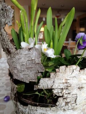 Detail of beautiful natural birch