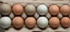 Pretty pasture-raised eggs