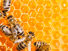 Healthy Bees, Healthy Hive, Healthy Humans