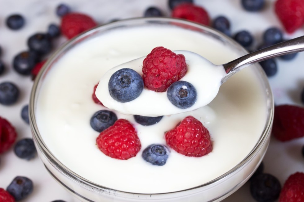 24 hour probiotic yogurt
