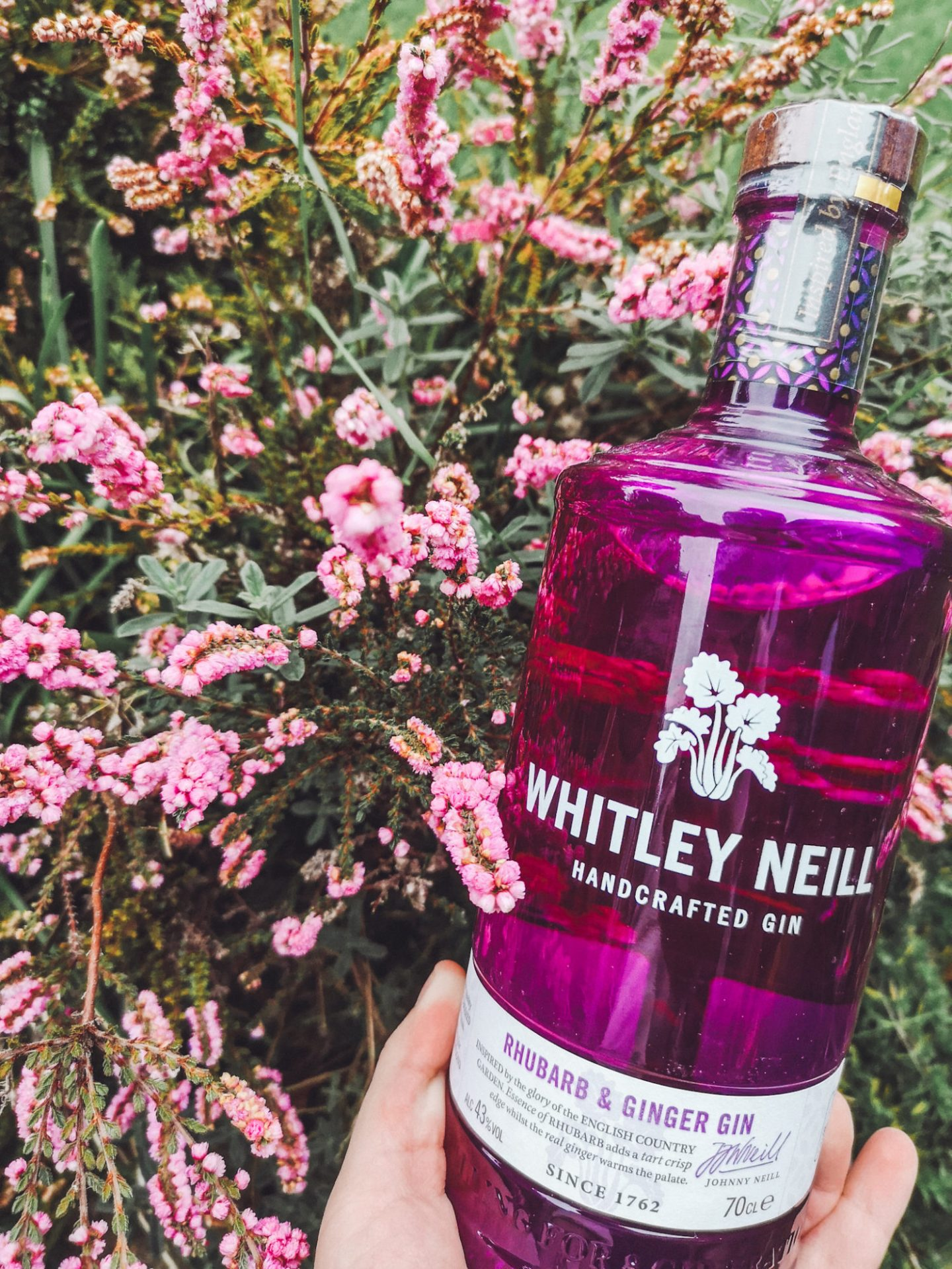 Is Whitley Neill Gin gluten free? Of course it is! Whitley Neill Rhubarb and Ginger is one of my favourite gins!