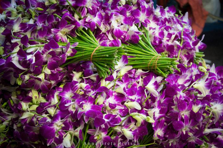 Orchideen_Blumenmarkt_Bangkok_Thailand